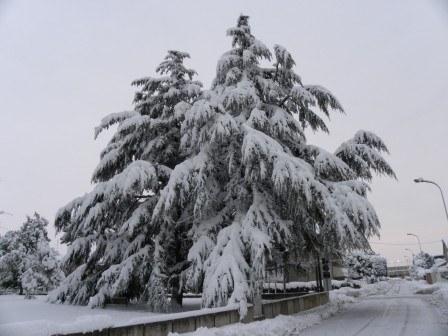 Arbusto-sotto-la-neve_imagelarge.jpg