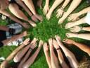Un welfare attivante: gli individui e la comunità
