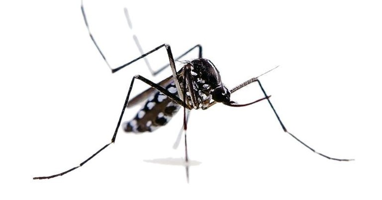 zanzara-tigre-1.jpeg